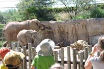 Reid Park Zoo | Tucson, Arizona